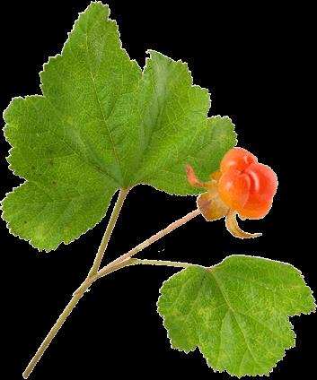 Leaf Berry